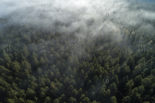 Germany- Baden-Wurttemberg- Drone view of autumn forest shrouded in morning fog