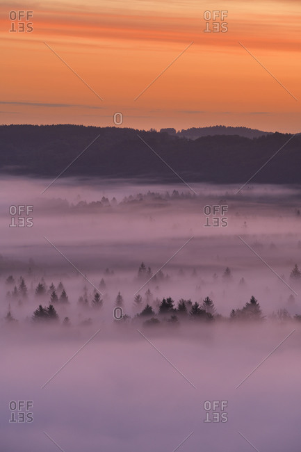 Germany- Bavaria- Pupplinger Au- Forest shrouded in thick fog at moody dawn
