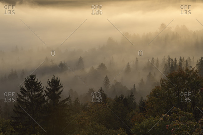 Germany- Bavaria- Pupplinger Au- Forest shrouded in thick morning fog