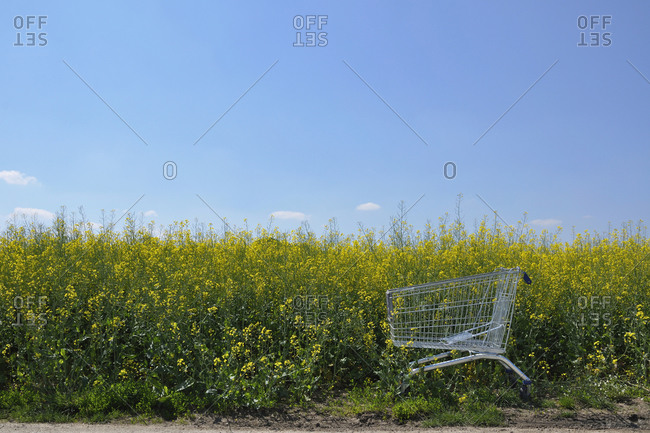 Empty shopping cart standing at edge of oilseed rape field in spring