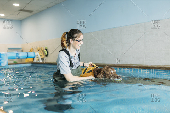 Female physiotherapist assisting Labrador Retriever in swimming pool