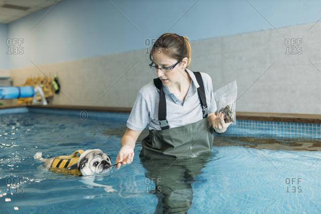 Female physiotherapist feeding pug dog in swimming pool
