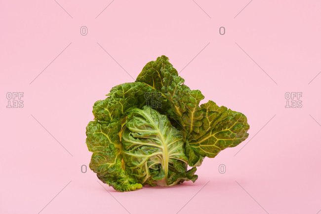 A green cabbage on a pink background with some blank space around it