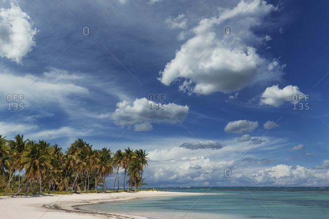 Caribbean, Punta Cana, Dominican Republic, Coconut palm trees over tropical beach