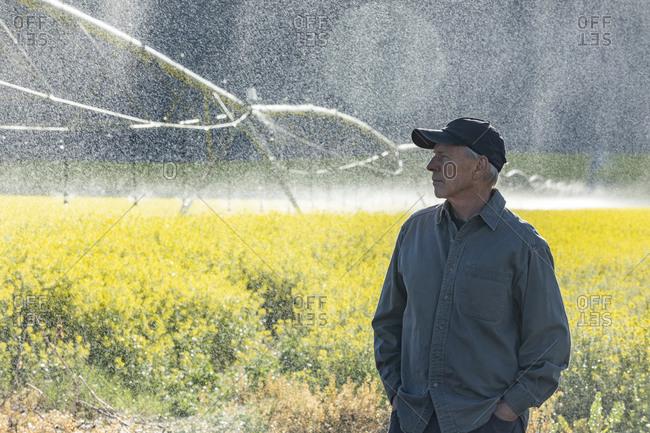 USA, Idaho, Sun Valley, Farmer standing in mustard field during irrigation