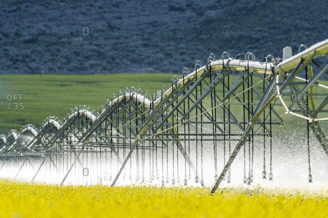 USA, Idaho, Sun Valley, Irrigation equipment in mustard field