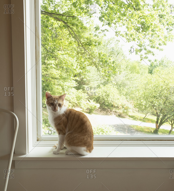 House cat on window sill