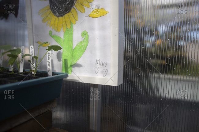 Child's drawing of a sunflower beside plant seedlings