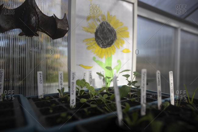 Decorative bat and child's drawing of a sunflower hanging in a greenhouse by plant seedlings