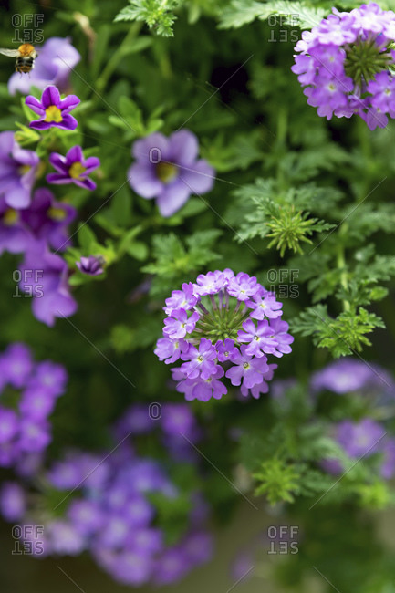 Purple flowers with shallow depth of field