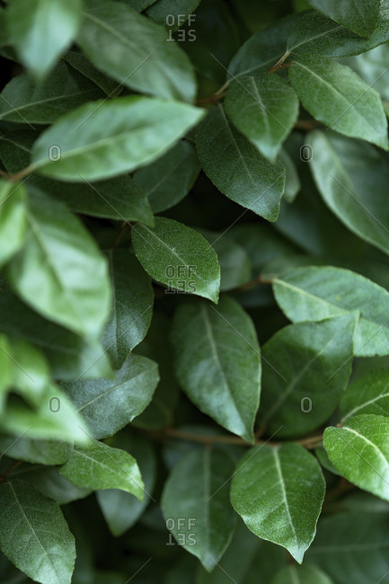 Green leafy plant with shallow depth of field