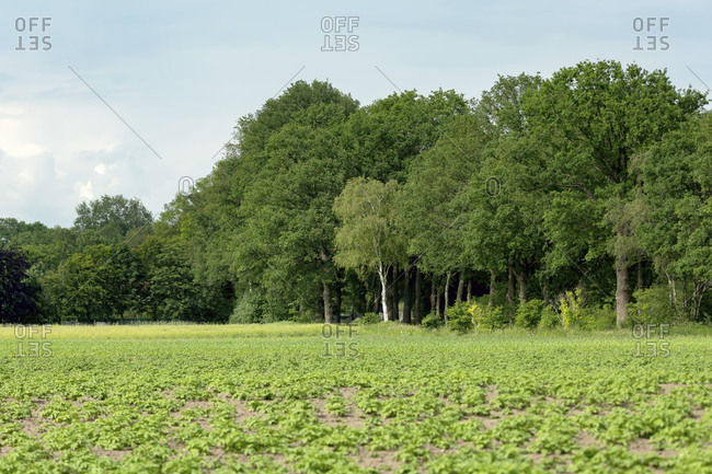 Rural scene of green fields and forest