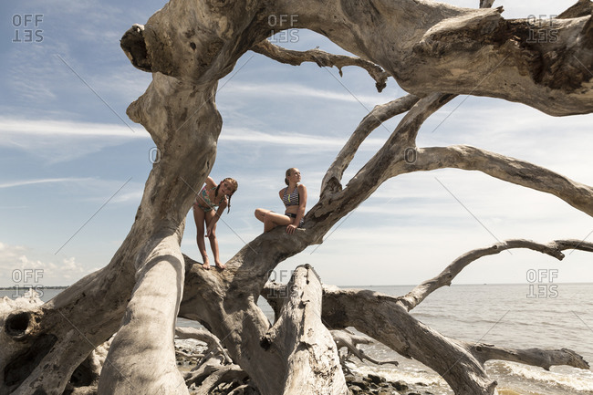 Pre teen girls climbing on giant driftwood tree, Georgia