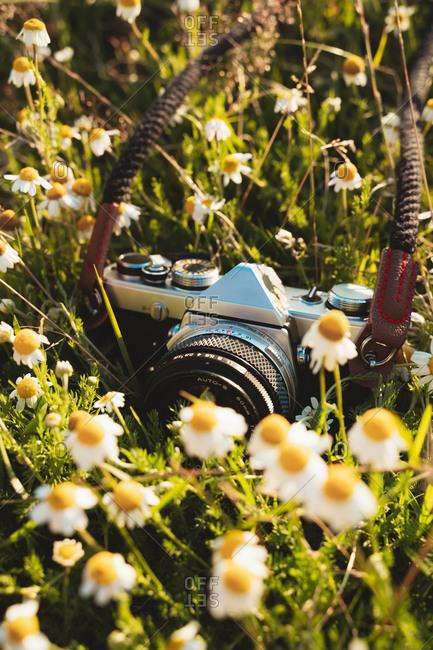 Vintage film camera lying on a daisy flower field on a sunny day