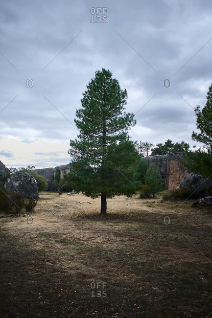 """Tree in the natural landscape """"La ciudad encantada"""" in Cuenca (Spain)"""