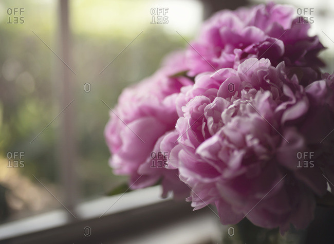Peonies in gray sky, dark shadows, by window