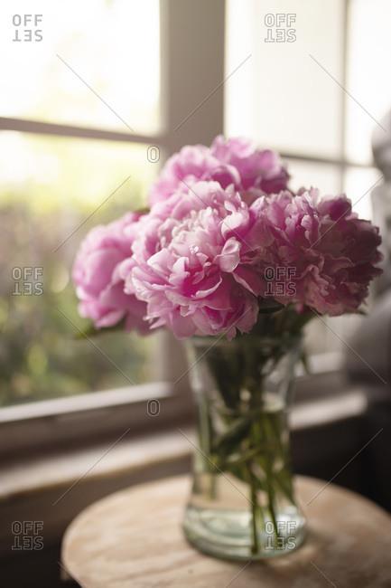 Morning sunshine coming through window onto vase filled w/pink peonies