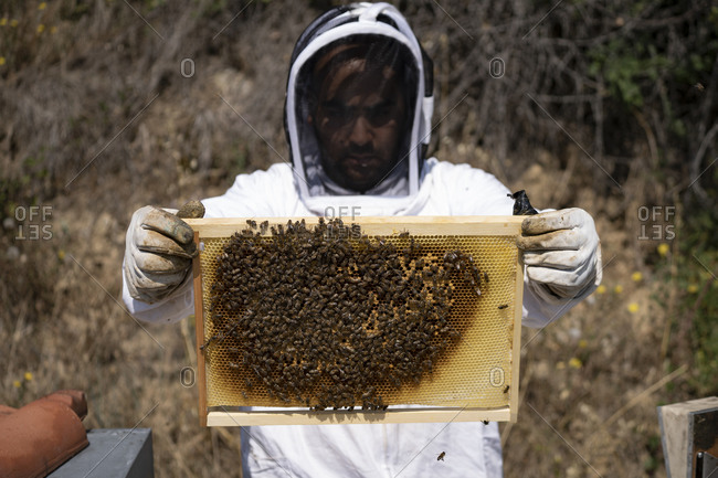 A beekeeper wears a suit and holds a beehive frame in front of him