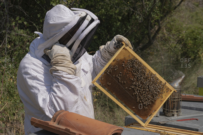 A thoughtful beekeeper happy of his work, risk of climate change
