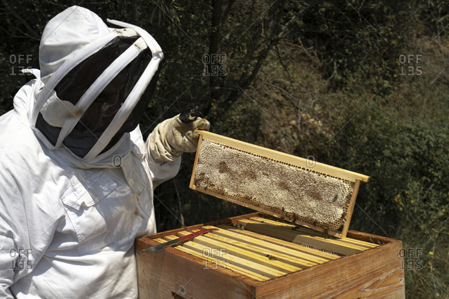 A man on a sunny day wears a bee suit and check beehive honey production