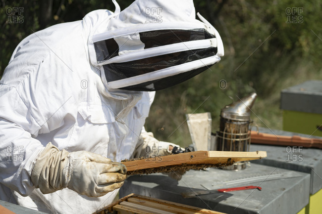 Male beekeeper examining honeycomb frame during sunny day