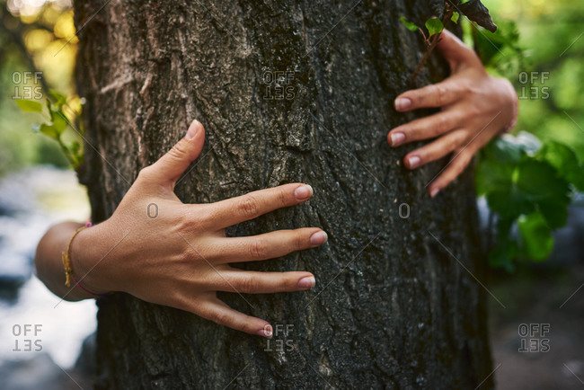 Hands touching a tree in the forest.