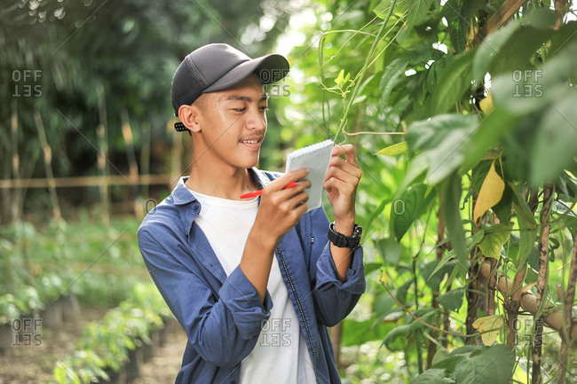 Portrait of smiling young Asian farmer man checking quality with small notebook. Happy young Asian farmer at the garden
