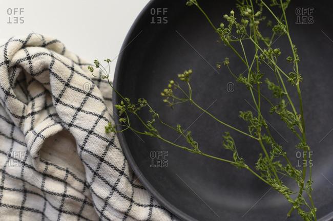 Seeded Cilantro Sprig on Black Bowl