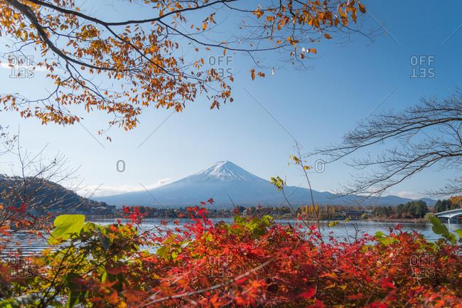 Autumn leaves in lake Kawaguchi with Fuji mountain view