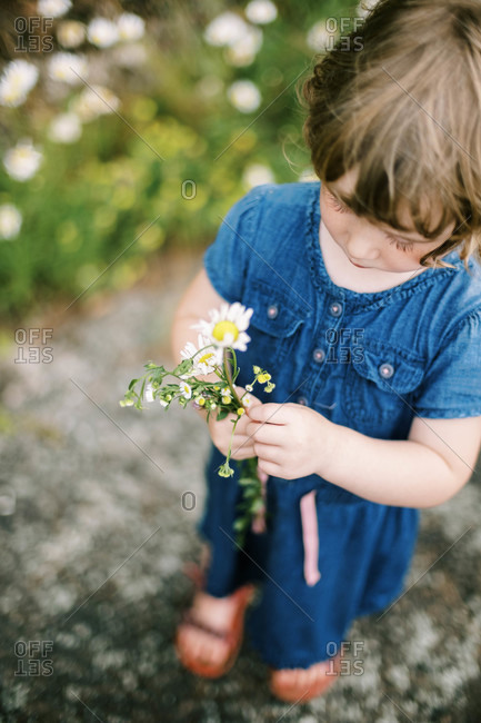 A little girl studying her picked wild flowers