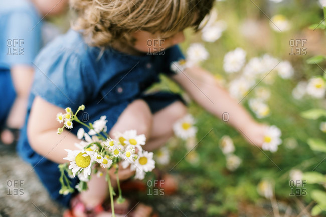 Little girl picking wild daisies on a hot and humid summer day