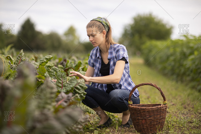 Young woman working as vegetable grower or farmer in the field