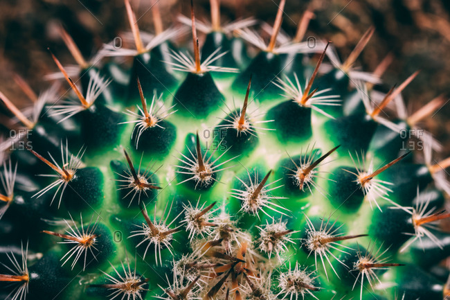 Close up of the little cactus