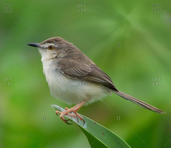 A bird portrait in innkeeper