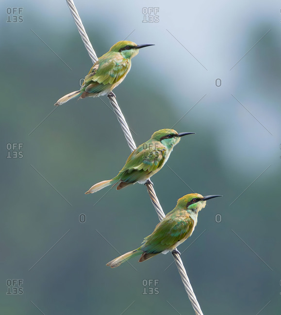 A group bird portrait in innkeeper