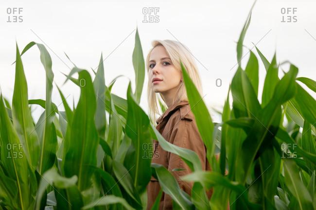 Blonde woman in cloak in cornfield in summertime