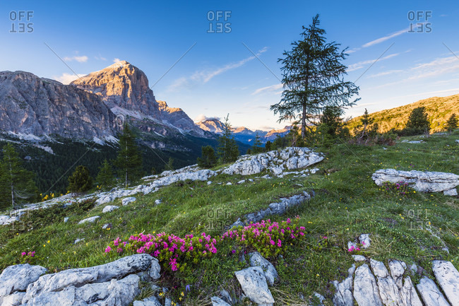 Tofana di Rozes (3225 m) at sunset, Falzarego Pass, Cortina d'Ampezzo, Dolomites, Alps, Province of Belluno, Veneto, Italy
