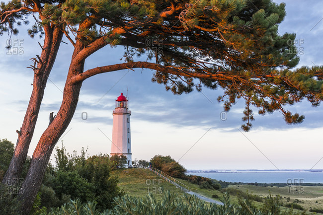 Dornbusch Lighthouse and slightly illuminated pine tree by the setting sun on Hiddensee Island, Mecklenburg-Western Pomerania, Germany