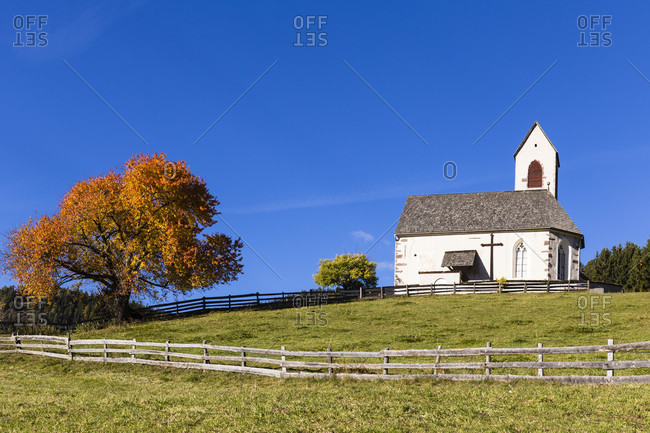 St. Jakob church and red cherry tree on a meadow, autumn, Villnoess Valley, Val di Funes, Bozen Province, Alto Adige, Tentino, South Tyrol, Italy