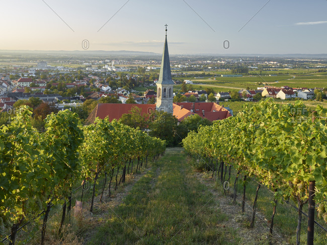 View of Gumpoldskirchen, St. Michael Church, thermal region, Lower Austria, Austria