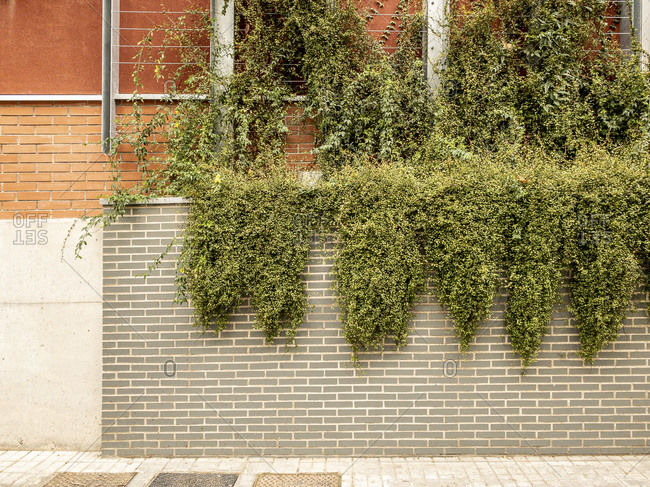 Architectural detail of a vertical garden on the Rambla de Poble Nou in the city of Barcelona in Catalonia Spain