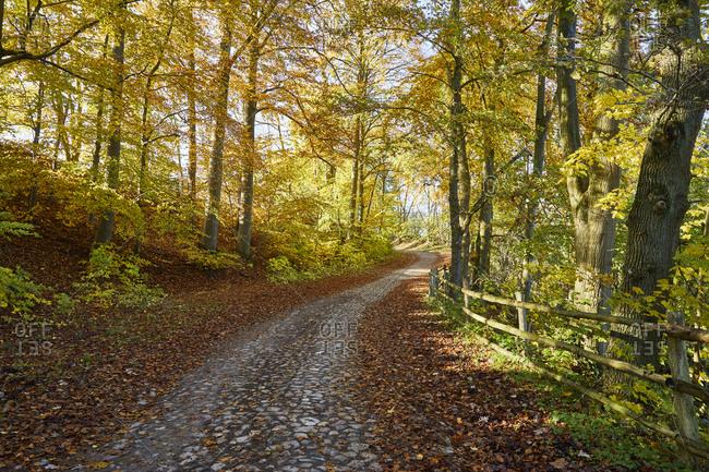 Germany, Mecklenburg-West Pomerania, Schaalsee, path, autumn