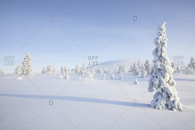 Finland, Lapland, snow covered trees in winter