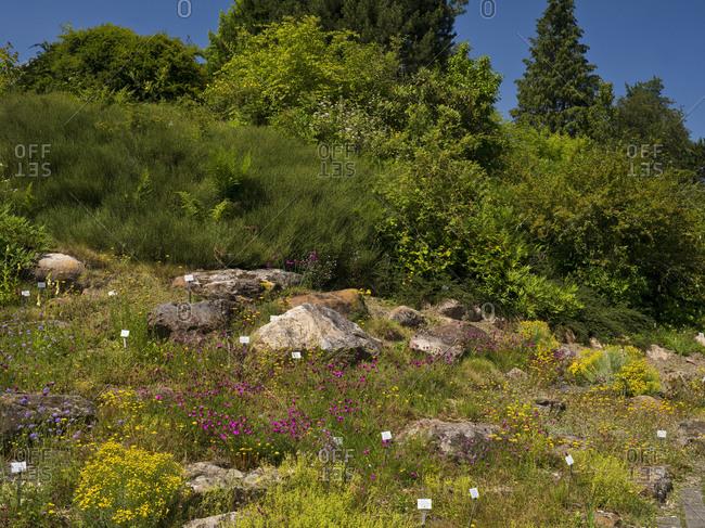 May 26, 2019: Europe, Germany, Hesse, Marburg, botanical garden of the Philipps University, plants of the alpine