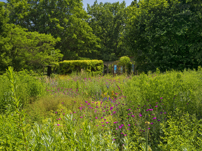 May 26, 2019: Europe, Germany, Hesse, Marburg, botanical garden of the Philipps University, view over summer flowers to the book cube