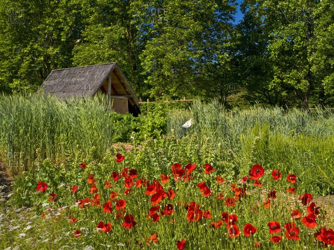 May 29, 2019: Europe, Germany, Hesse, Marburg, Botanical Garden of the Philipps University, Keltengarten