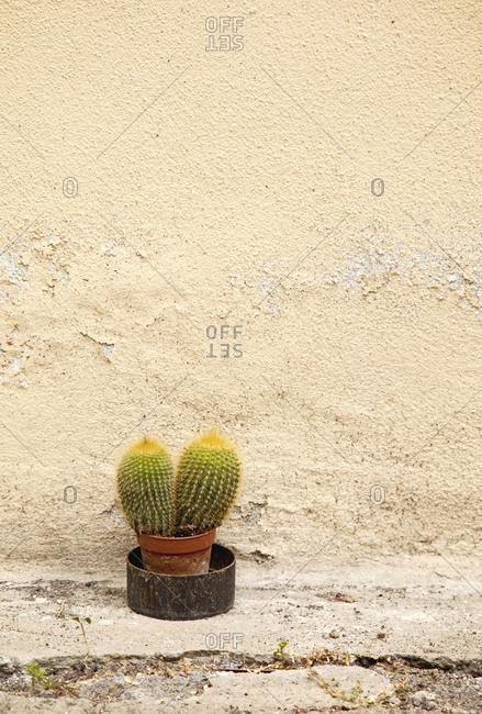 Succulent, cactus, plants, Tuscany, Italy