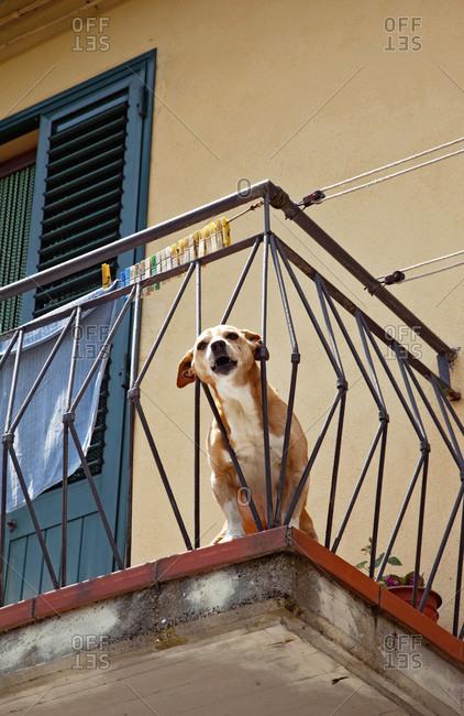 House, dog, Prato, Tuscany, Italy