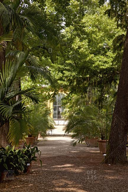 Tree, palm tree, Florence, Tuscany, Italy