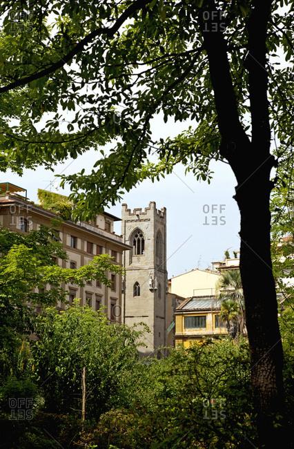 Tree, tower, Florence, Tuscany, Italy